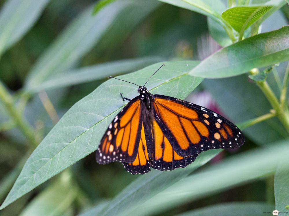 Wien in 24 Stunden Travelguide Tipps Reisetipps Monarchfalter Schmetterlingshaus